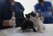 الأولى في البلاد.. كوريا الجنوبية تعلن إصابة قطّة بفيروس كورونا